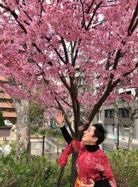 sakura-with-me